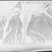 Frost Monsters Art Print