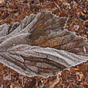Frosted Raspberry Leaf Art Print