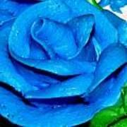 Frosting Rose Art Print