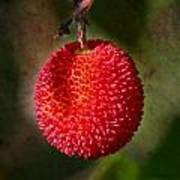 Fruit Of Strawberry Tree Art Print