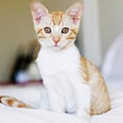 Fuji Kitten Art Print
