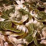 Fungus Swirl Art Print by Michael Putnam