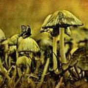 Fungus World Print by Chris Lord