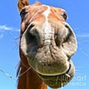 Funny Brown Horse Face Art Print by Jennie Marie Schell