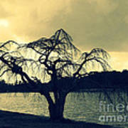Furman Lake Tree Art Print