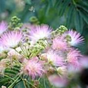 Furry Pink Bouquet Art Print