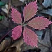 Fushia Leaf Art Print