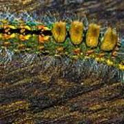 Fuzzy Caterpillar Art Print