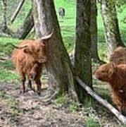 Fuzzy Cows Art Print by Bob Jackson