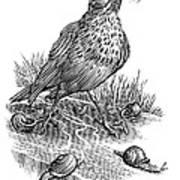 Garden Bird Catching Snails, Artwork Art Print by Bill Sanderson
