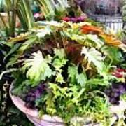 Garden Bowl Of Foliage Art Print