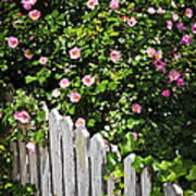 Garden Fence With Roses Art Print by Elena Elisseeva