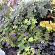 Garden Flower Border Art Print