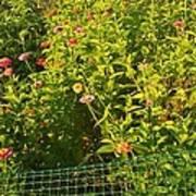 Garden Flowers Mixed Colors Art Print