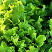Garden Fresh Salad Bowl Lettuce Art Print