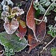 Garden Frost Art Print