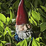 Garden Gnome No 0065 Art Print