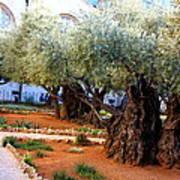 Garden Of Gethsemane Art Print