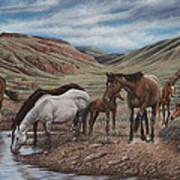 Gathering At Diablo Canyon Art Print