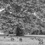 Geese By The River Art Print by Bill Cannon