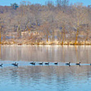 Geese In The Schuylkill River Art Print