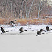 Geese Take Flight Over The Maumee River Art Print