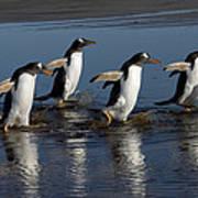 Gentoo Penguin Pygoscelis Papua Group Art Print
