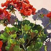 Geraniums And Shadows Art Print