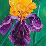 German Iris Art Print