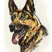 German-shepherd-portrait Art Print