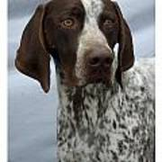 German Shorthaired Pointer 442 Art Print