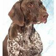 German Shorthaired Pointer 960 Art Print