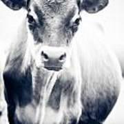 Ghost Cow 1 Art Print
