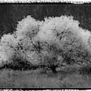Ghost Tree Art Print