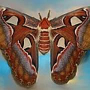 Giant Silk Moth Art Print