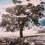 Giant Tree In City Art Print