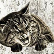 Giggle Kitty  Art Print