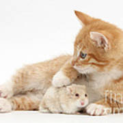 Ginger Kitten And Russian Hamster Art Print