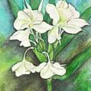 Ginger Lilies Art Print