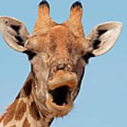 Giraffe Calling Art Print