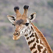 Giraffe Close-up Art Print