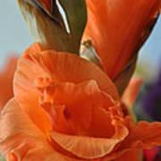 Gladiola Blooms Art Print