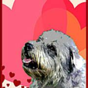 Glen Of Imaal Terrier Art Print