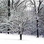 Glenna's Dogwood In The Snow Art Print