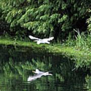 Gliding Through The Swamp Art Print