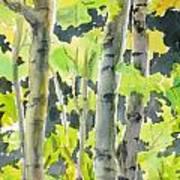 Glittering Poplars Art Print