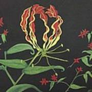 Gloriosa Art Print by Melanie Blankenship