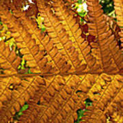 Gold Leaf Art Print by William Fields
