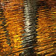 Gold Reflection Art Print
