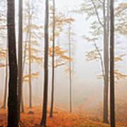 Golden Autumn Forest Art Print